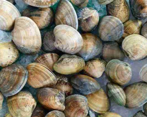 almeja carril natural, paellas arroces y marisco restaurantesalamar.es com