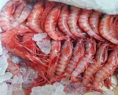 gamba roja de almeria. paellas arroces y marisco restaurantesalamar.es com 2